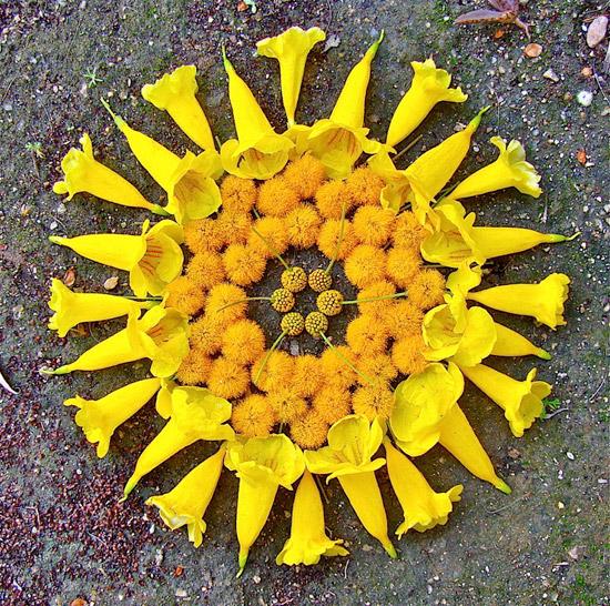 поделки из цветов land art